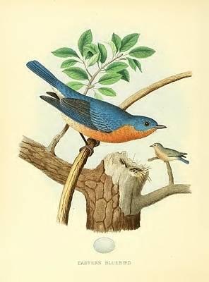 Bluebird Digital Art - Eastern Bluebird by MotionAge Designs