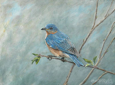 Ornithological Painting - Eastern Bluebird by Rob Dreyer