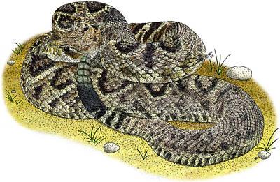 Photograph - Eastern Diamondback Rattlesnake by Roger Hall