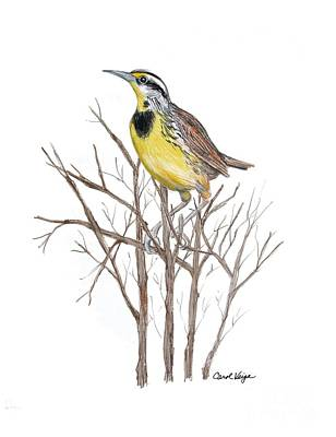 Meadowlark Drawing - Eastern Meadowlark by Carol Veiga
