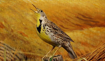 Photograph - Eastern Meadowlark by Larry Trupp