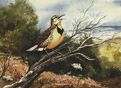 Meadowlark Painting - Eastern Meadowlark by Sam Sidders