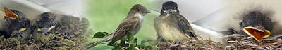 Photograph - Eastern Phoebe Family by Natalie Rotman Cote