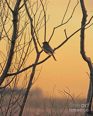 Photograph - Eastern Phoebe Lacassine Nwr Louisiana by Lizi Beard-Ward