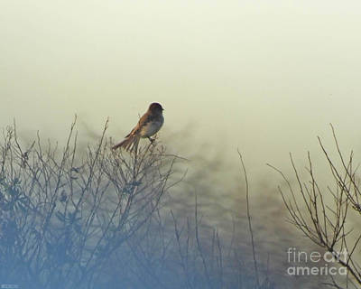 Photograph - Eastern Phoebe Lacassine Pool  Lacassine Nwr by Lizi Beard-Ward