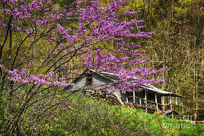 Abstract Male Faces - Eastern Redbud and Abandoned Home by Thomas R Fletcher