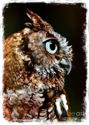 Screech Owl Photograph - Eastern Screech-owl Profile - Digital Art by Carol Groenen