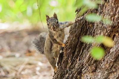 Pine Squirrel Photograph - Eastern Sierra Nevada by Michael Qualls