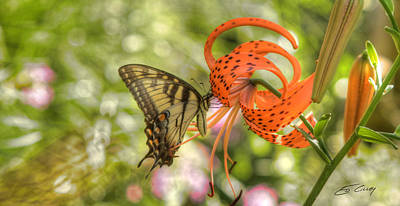 Eastern Tiger Swallowtail - Papilio Glaucus - Butterfly On Tiger Lily Art Print by Ed Cilley