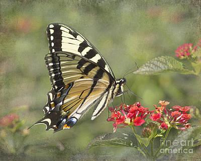 Eastern Tiger Swallowtail Beauty Art Print by TN Fairey