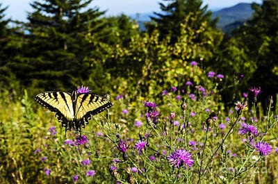 Virginia Butterfly Photograph - Eastern Tiger Swallowtail Blazing Star by Thomas R Fletcher