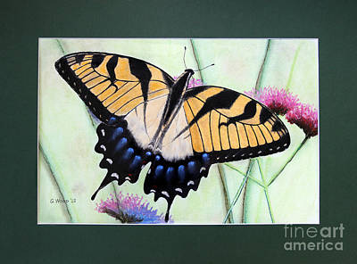 Photograph - Eastern Tiger Swallowtail Butterfly By George Wood by Karen Adams