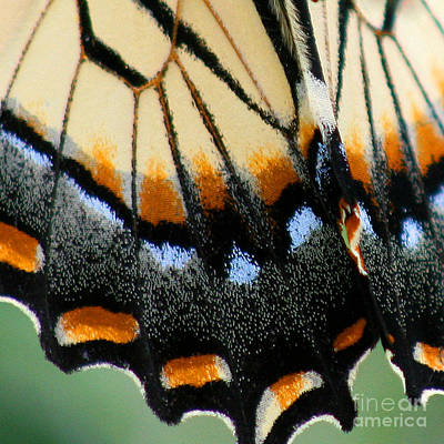 Photograph - Eastern Tiger Swallowtail Butterfly Wing Square 2 by Karen Adams
