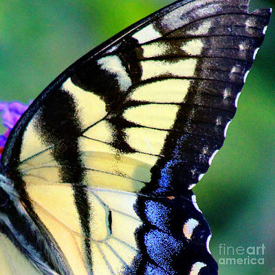 Photograph - Eastern Tiger Swallowtail Butterfly Wing Square 3 by Karen Adams