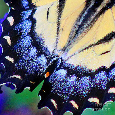 Photograph - Eastern Tiger Swallowtail Butterfly Wing Square 4 by Karen Adams