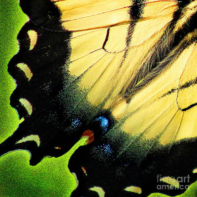 Photograph - Eastern Tiger Swallowtail Butterfly Wing Square by Karen Adams