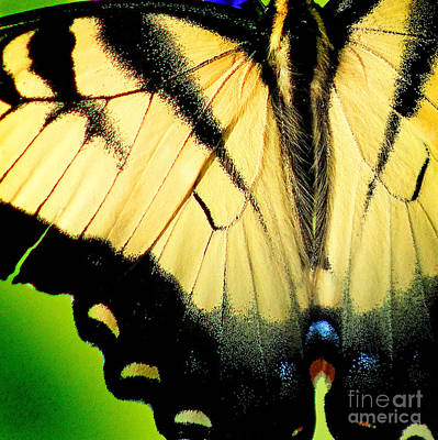 Photograph - Eastern Tiger Swallowtail Butterfly Wings Square by Karen Adams