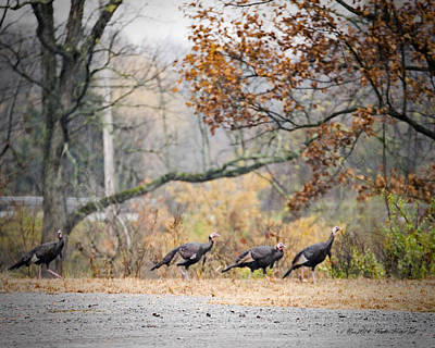 Photograph - Eastern Wild Turkey  by Walter Herrit