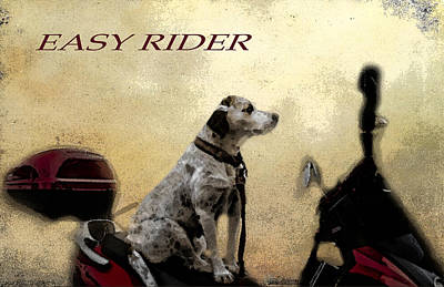 Photograph - Easy Rider by Belinda Greb