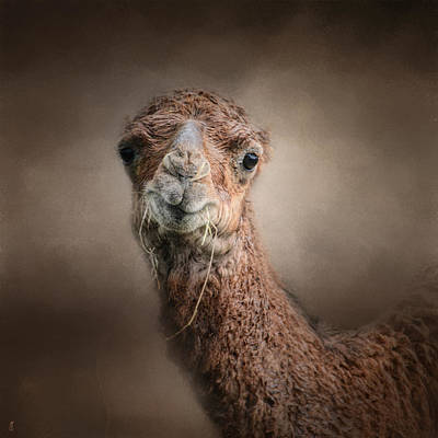 Camel Photograph - Eat Your Veggies - Baby Camel - Wildlife by Jai Johnson