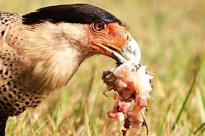 Photograph - Eating Fish by Ira Runyan