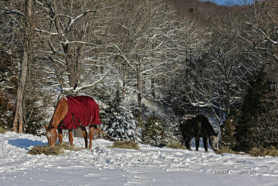 Art Print featuring the photograph Eating Hay In The Snow by Denise Romano