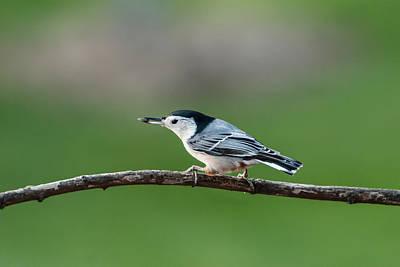 Photograph - Eating Like A Bird by Paul Johnson