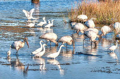 Egret Landscape Photograph - Eating With Caution by Scott Hansen