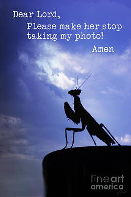 Photograph - Eavesdropping On A Mantis by Nola Lee Kelsey