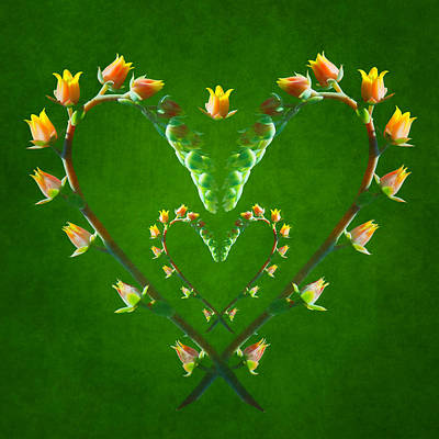 Manipulation Photograph - Echeveria Hearts by Nikolyn McDonald