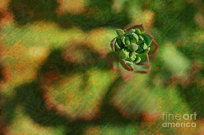 Ecosystem Photograph - Echeveria Ruffles Crassulaceae by Floyd Menezes