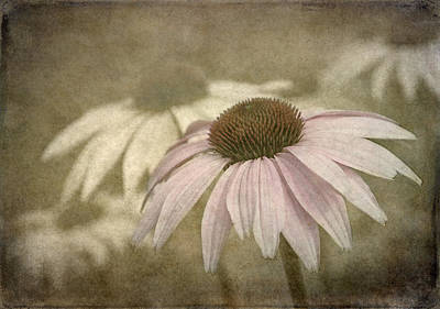 Photograph - Echinacea  by Angie Vogel