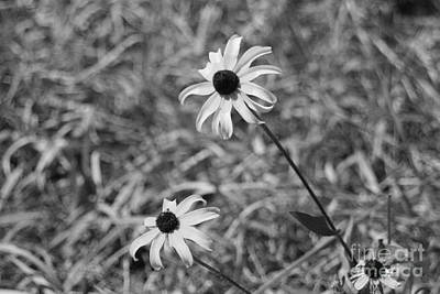Photograph - Echinacea by Barbara Bardzik