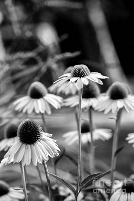 Photograph - Echinacea by Brad Marzolf Photography