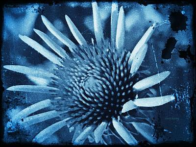 Photograph - Echinacea  by Chris Berry