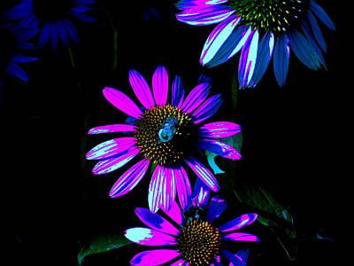 Echinacea Hot Blue Art Print by Karla Ricker