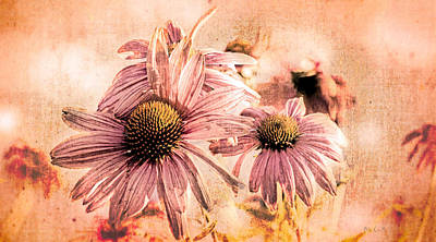 Coneflowers Photograph - Echinacea Impressions  by Bob Orsillo