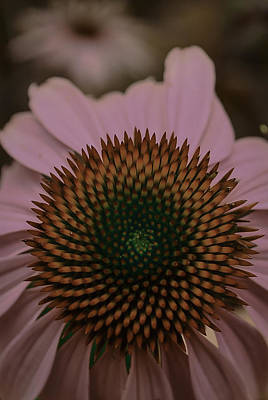 Photograph - Echinacea - My Pretty Mandala by Rae Ann  M Garrett