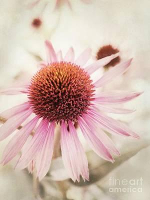 Echinacea Photograph - Echinacea by Priska Wettstein