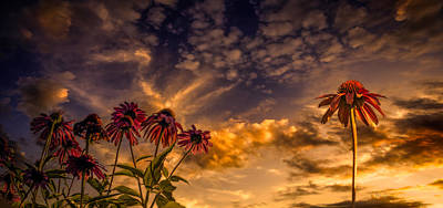 Surrealism Royalty-Free and Rights-Managed Images - Echinacea Sunset by Bob Orsillo
