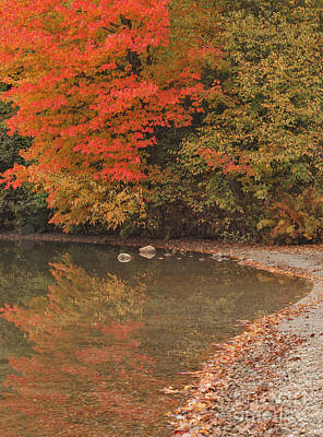 Maples Photograph - Echo Lakeshore by Charles Kozierok