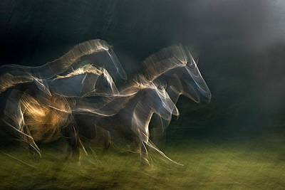 Flock Photograph - Echoing In Motion by Milan Malovrh