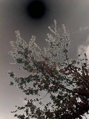 Photograph - Eclipse by Mark C Ettinger