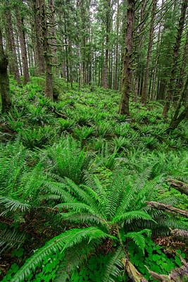 Forest Floor Photograph - Ecola Ferns by Rick Berk
