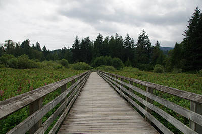 Photograph - Ed Nixon Trail Boardwalk by Marilyn Wilson