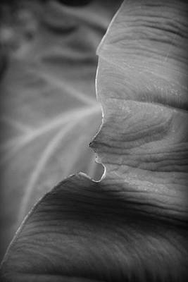 Photograph - Edge Of A Leaf II by Kelly Hazel