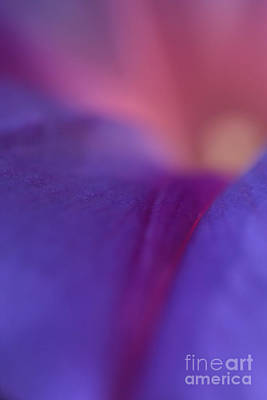 Photograph - Purple Glow   by John F Tsumas