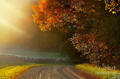 Sandra Silva Photograph - Edge Of Light by Sandra Silva