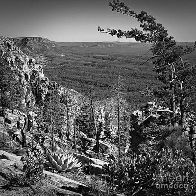 Photograph - Mogollon Rim Square  by Lee Craig
