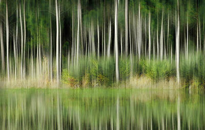 Photograph - Edge Of The Forest by Grace Dillon